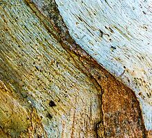 Bark abstract, with ants. by ronsphotos