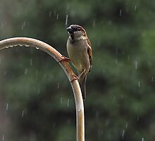 Enjoying The Rain On a Hot Summer Day by Cynthia Broomfield