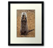 Praying for Fish Framed Print