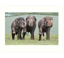 Three Elephants Art Print