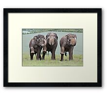 Three Elephants Framed Print