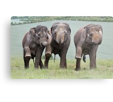 Three Elephants Metal Print
