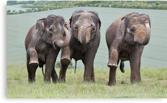 Three Elephants by Patricia Jacobs DPAGB LRPS BPE4