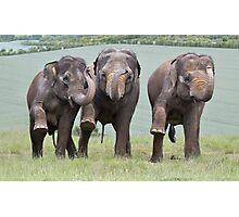 Three Elephants Photographic Print