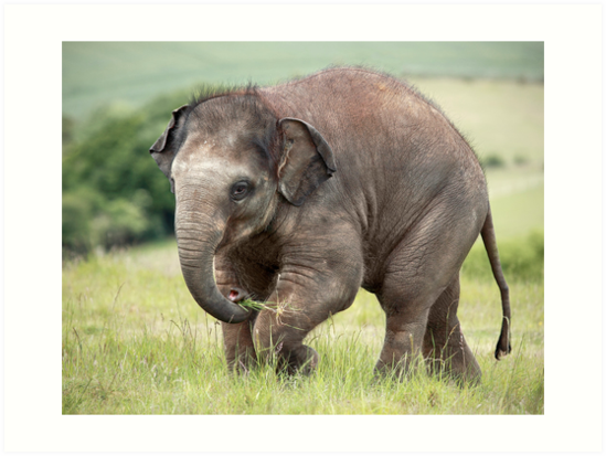 Baby Elephant by Patricia Jacobs CPAGB LRPS BPE4