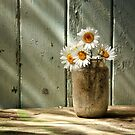 A Jar of Daisies by Patricia Jacobs DPAGB LRPS BPE4