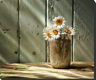 A Jar of Daisies by Patricia Jacobs CPAGB LRPS BPE2