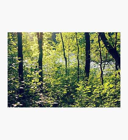 fairy ground Photographic Print