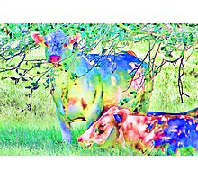 Cow Painting Photographic Print