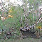 Natural vegetation near El Questro Wilderness Park by Margaret  Hyde