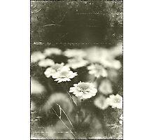 Joy Remembered Photographic Print