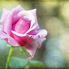 Aged Rose... by Judy Clark