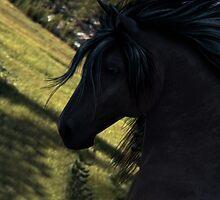 Black Stallion by anguishdesigns