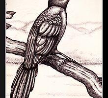 Scimitar-billed Woodcreeper by Sean Phelan