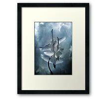 Swan Dance Framed Print