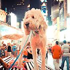 Times Square Pup by Jacki Campany