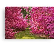 Walls of Azaleas Canvas Print