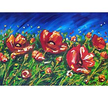 Wild Poppies by Ira Mitchell-Kirk Photographic Print