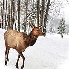 Walking in a Winter Wonderland - She Elk by Poete100