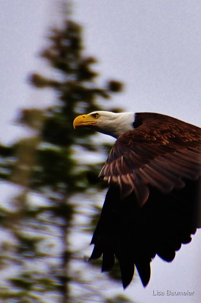 Eagle Eye by Lisa Baumeler