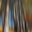 Into the Woods No3 - Digital Art by David Alexander Elder
