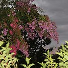 At Dusk - Crape Myrtles by JeffeeArt4u
