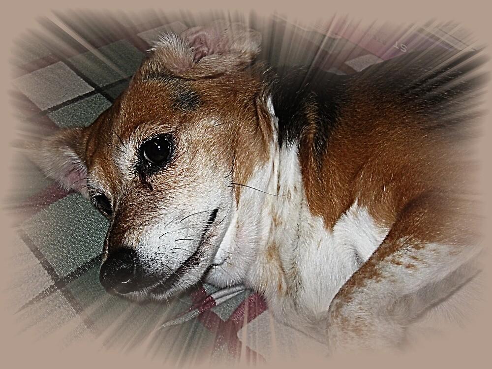 The Sweetest Dog by Darlene Bayne