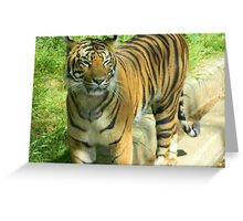 Tiger At The Zoo Greeting Card