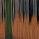 Into the Woods No6 - Digital Art by David Alexander Elder