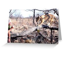 Walking with lions 2 Greeting Card