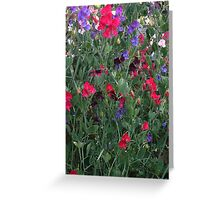 JWFrench Collection Sweet Peas Original Greeting Card