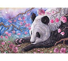 Lazy Panda Photographic Print