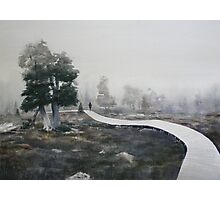 Pines in the Mist- Pine Lake Tasmanian Highlands Photographic Print