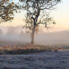 A Frosty Morn by Jenelle  Irvine