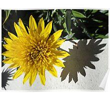 L'Ombra di un Fiore in Primavera Poster