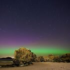 Northern Lights by Steve Jensen