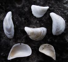 Six Shells by Ken Hill