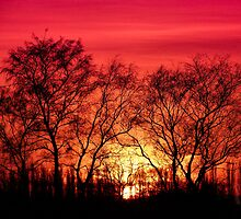 Trees in the Sunset by John Dunbar