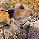 Puppy Dog Eyes by Sharlene Rens