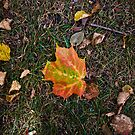 Fall is Upon Us by Sharlene Rens