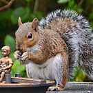 ' Nuts About Nuts' by lynn carter