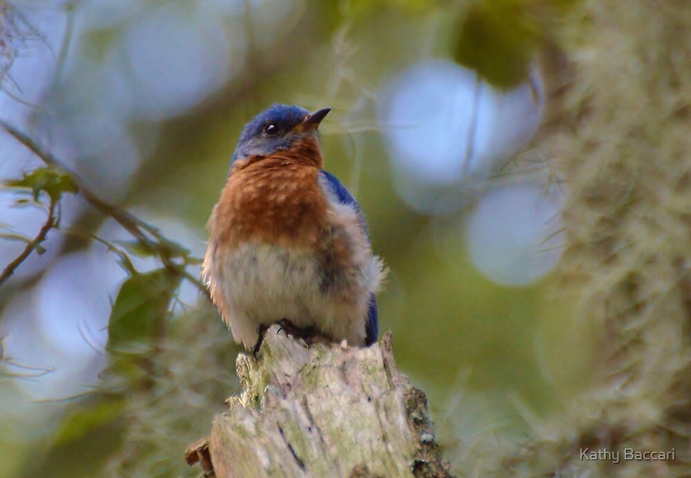 Bluebird Nestled In The Spanish Moss by Kathy Baccari