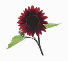 Cherry and Chocolate Sunflower by Susan Savad