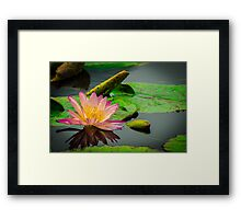 Magestic beauty Framed Print