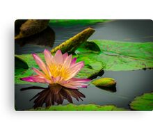 Magestic beauty Canvas Print