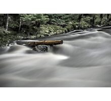 River tree Photographic Print