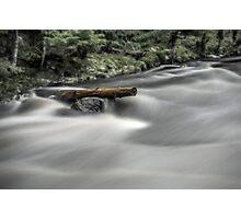 River tree Photographic Print