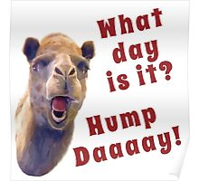Hump Day Poster