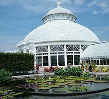 Water Lilly, New York Botanical Garden, Bronx, New York by lenspiro