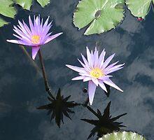 Flower Reflection, Cloud Reflection, New York Botanical Garden, Bronx, New York   by lenspiro